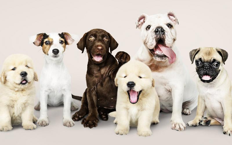 Por qué Contratar un seguro para mascotas
