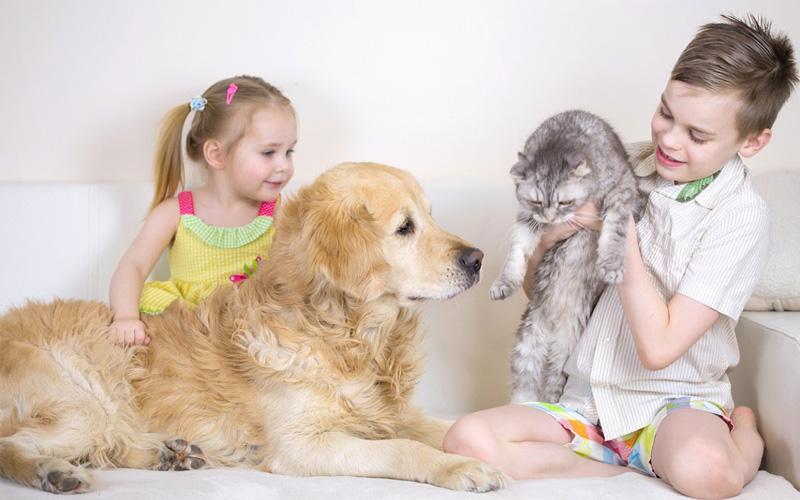 seguro de mascotas navidad
